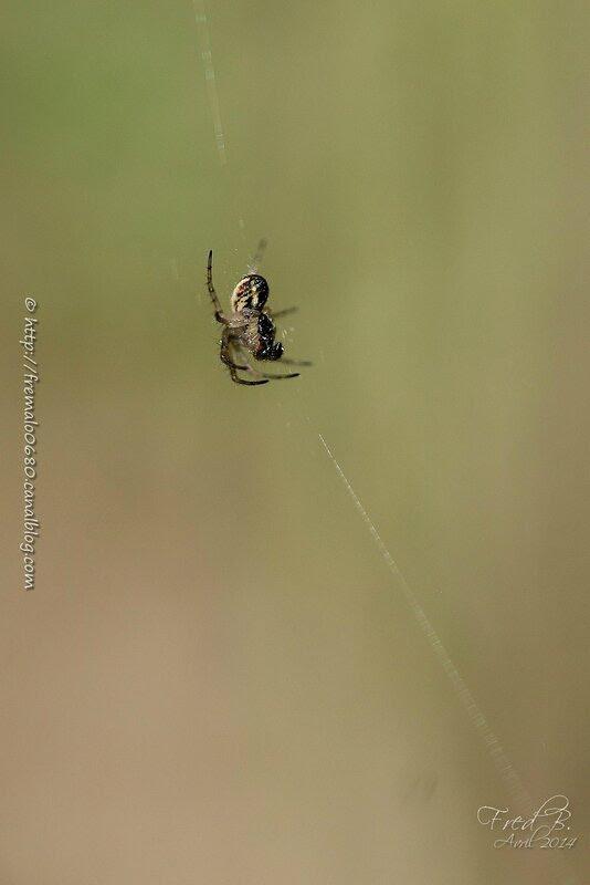 Arachnide #1