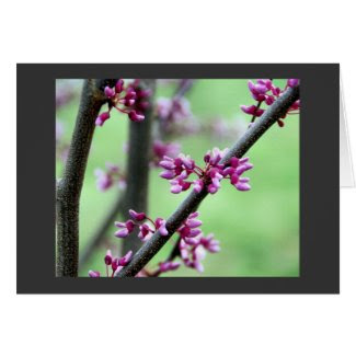 April Redbud card