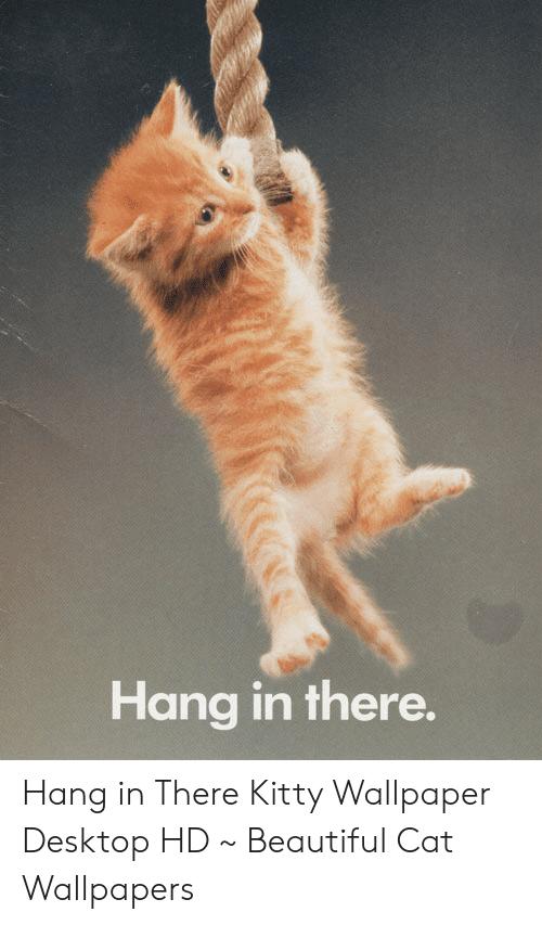 2000+ Wallpaper Hd Cat HD Paling Keren