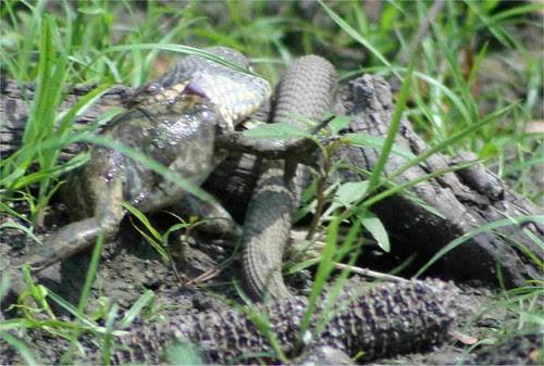 snake7