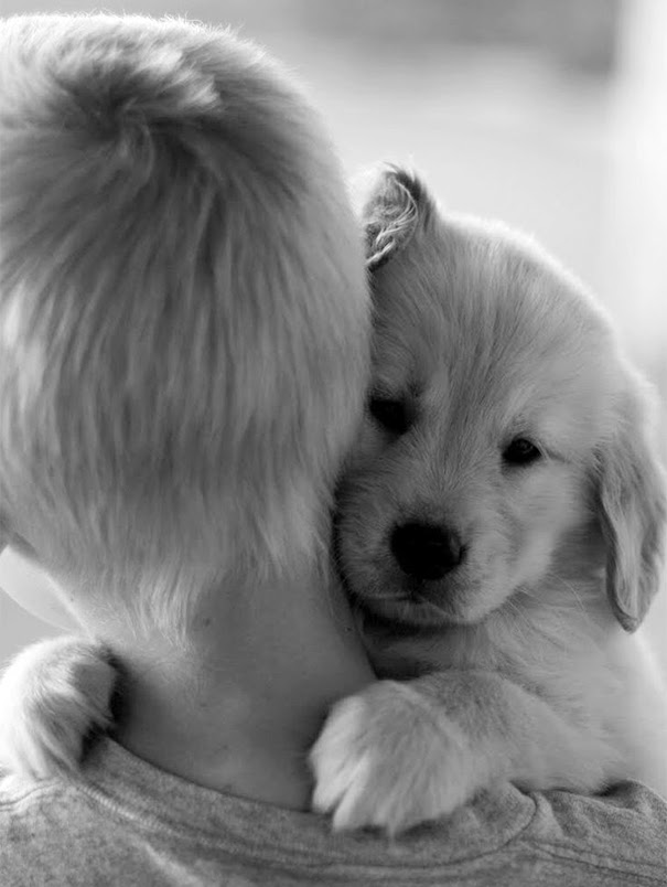 cute-dogs-hugging-humans-99