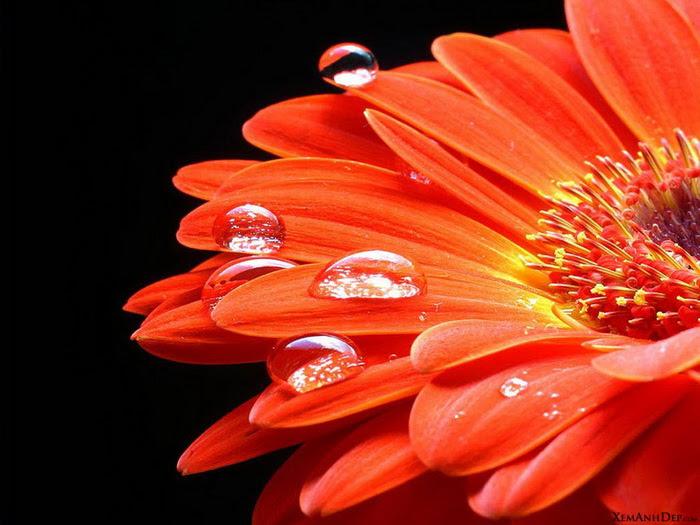 Flower drops photos