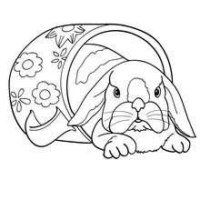 Kaninchen In Einer Tasse Zum Ausmalen Zum Ausmalen De Hellokids Com