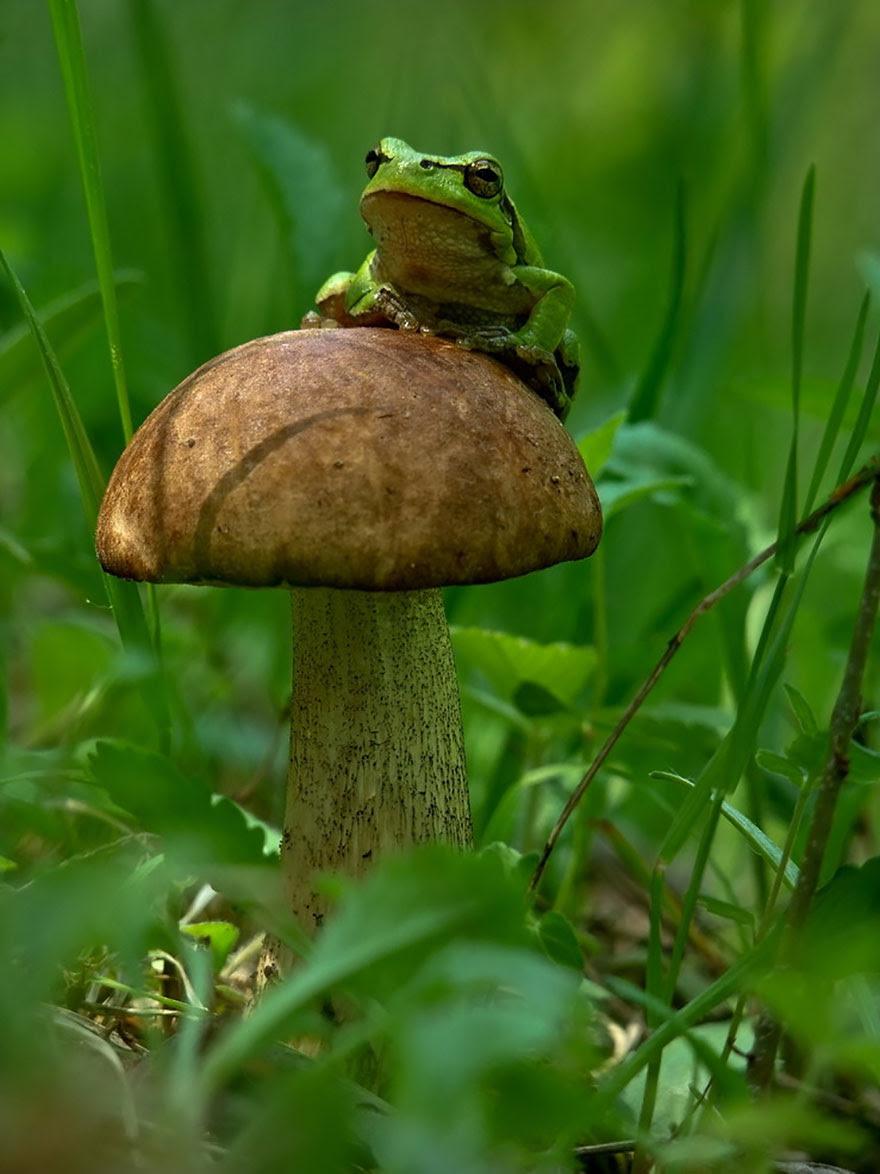 mushroom-photography-vyacheslav-mishchenko-24