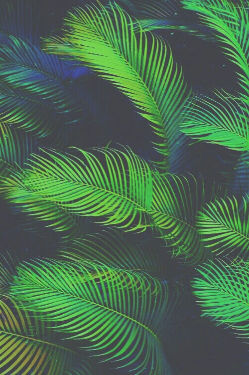 30 Beautiful Summer Tropical Leaf Background Tumblr Summer Background Pikbest has 3796 tropical leaves design images templates for free. 30 beautiful summer tropical leaf