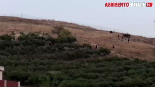Agrigentonotizie.it – Ennesima fuga da Villa Sikania: migranti provano a nascondersi fra i campi, poliziotto ferito in ospedale