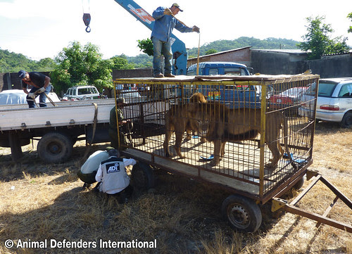 © ADI Pancho and Temuco seized Bolivia