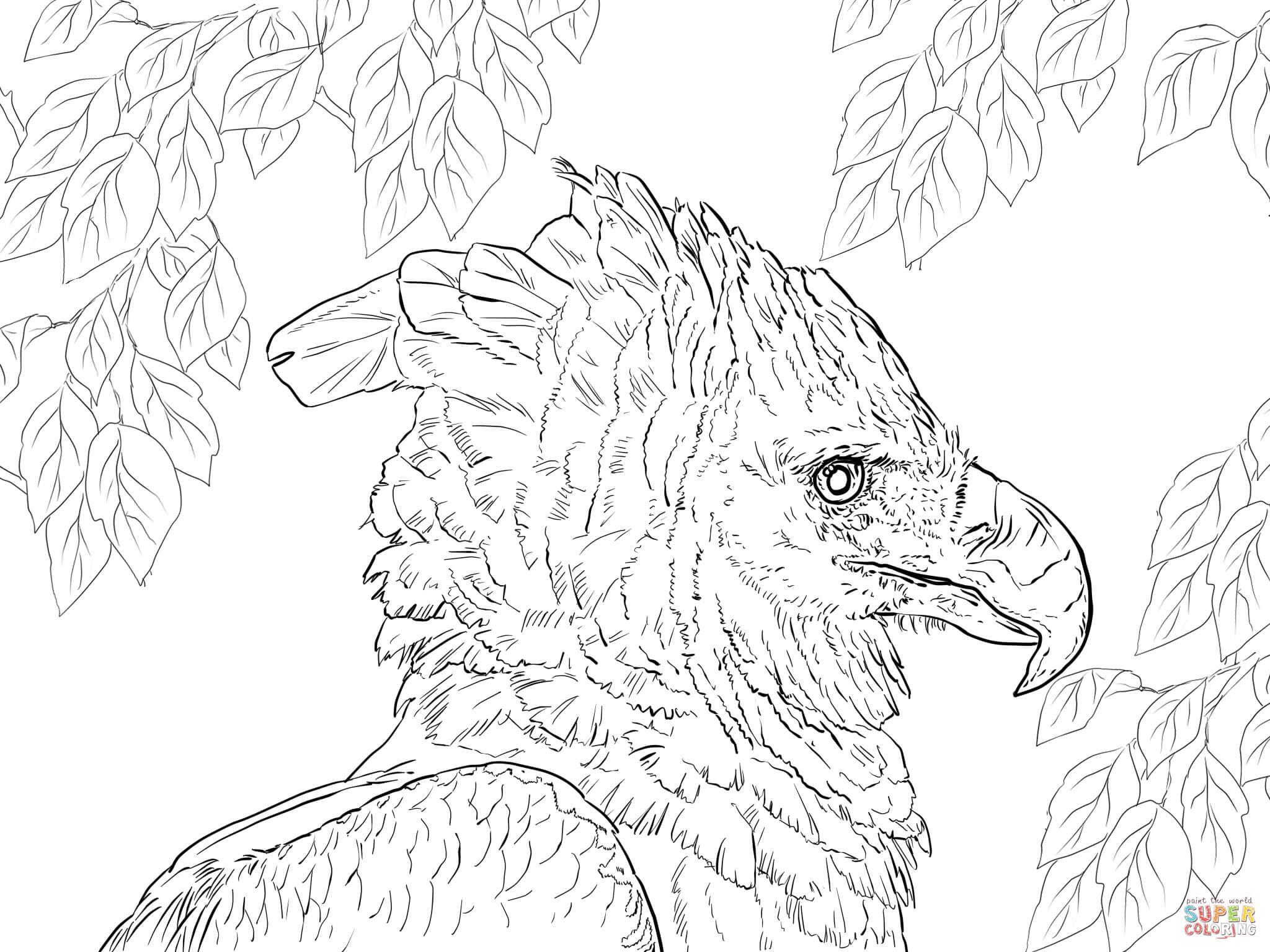 Harpyienadler im Profil