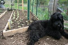 skippy in the garden