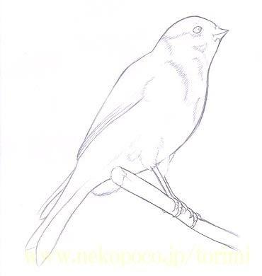 鳥塗り絵プレゼントカナリア編 ようこそとりみカフェ鳥