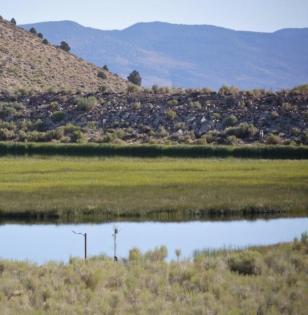 perch set on wetland