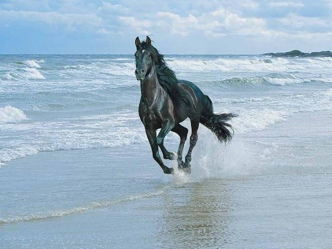 सूरज का सातवां घोड़ा...खुशदीप