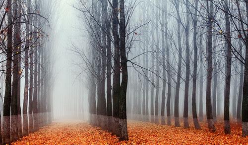 The Labyrinth por Evgeni Dinev