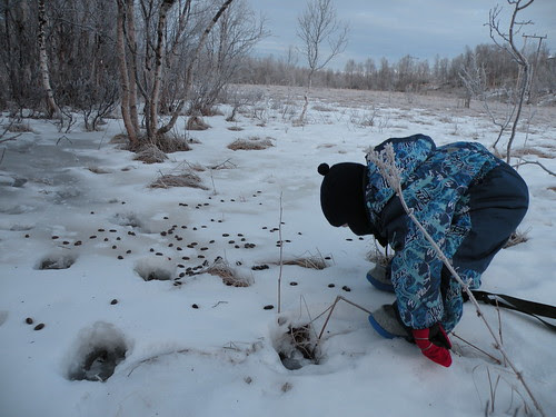 Looking at elk tracks and excrements