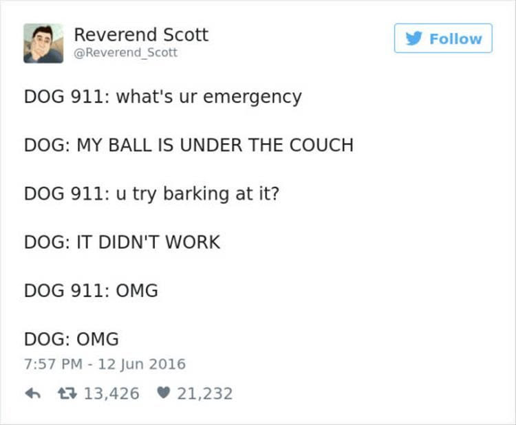 The Funniest Twitter Quotes About Dogs Death To Boredom