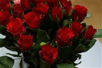 Fotos De Rosas Las Rosas De Flores Rosas Fotos Fondos De Rosas
