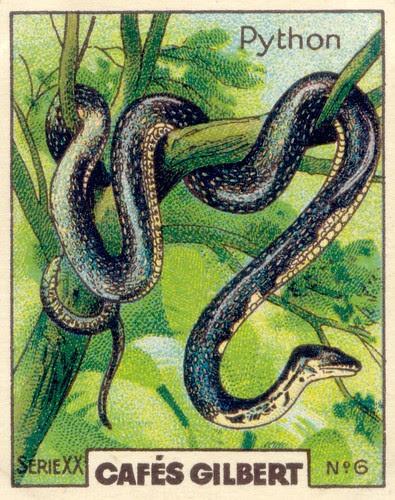 gilbert reptile 6