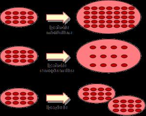 Personal Trainer Bologna - Sviluppo della massa muscolare e basi dell'ipertrofia