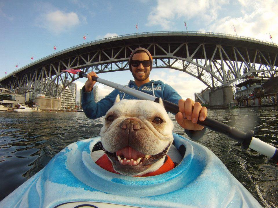dog-in-kayak