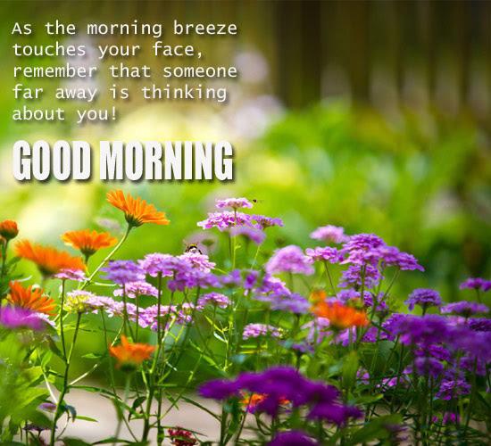 Thinking About You Free Good Morning Ecards Greeting Cards 123