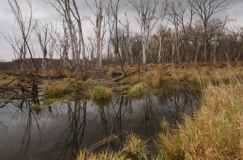 Hwy 61 Backwater 1