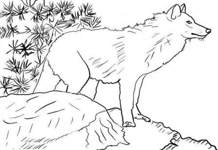 Dibujos De Lobos Para Colorear Lobopedia