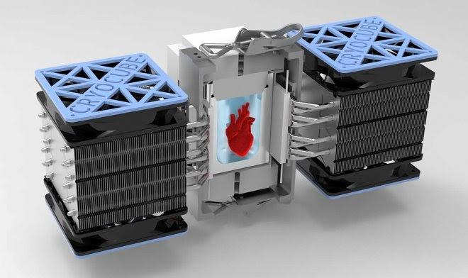 Ученые заставили рукотворное сердце биться после глубокой заморозки