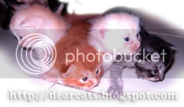 Teori Mengapa Kucing Makan Anak My Dearcats Dc