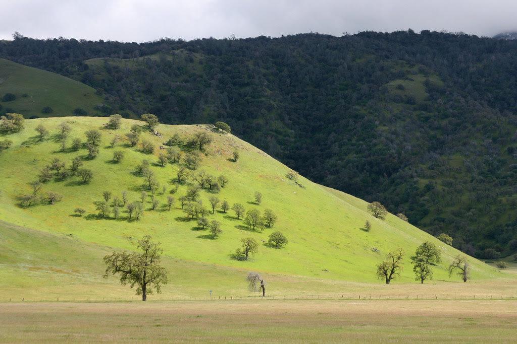 oak_hillside