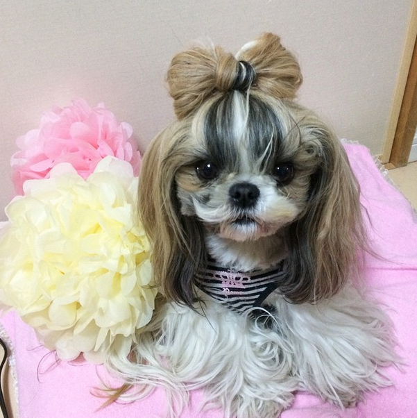 Dressed To The (Ca)nines: 9 Dog Hairstyles For The Stylish ...