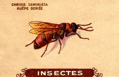 insecte 10