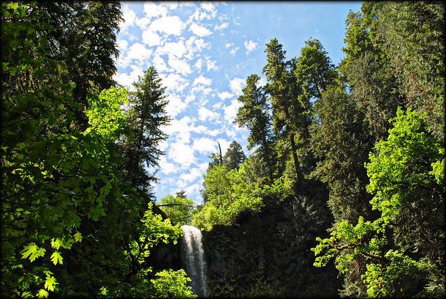Pup Creek Falls under blue skies - Clackamas River Trail
