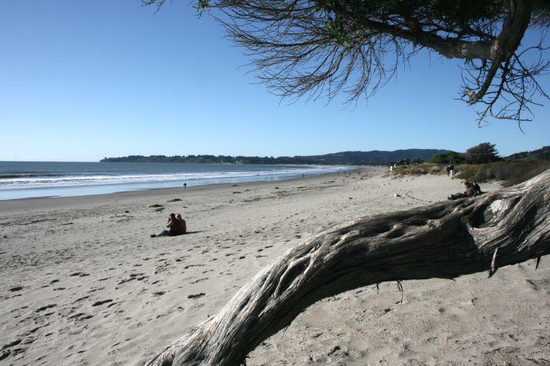 Stinson Beach through branch
