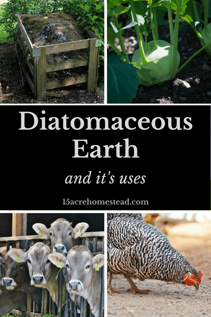 Diatomaceous Earth and Its Uses. - 15 Acre Homestead