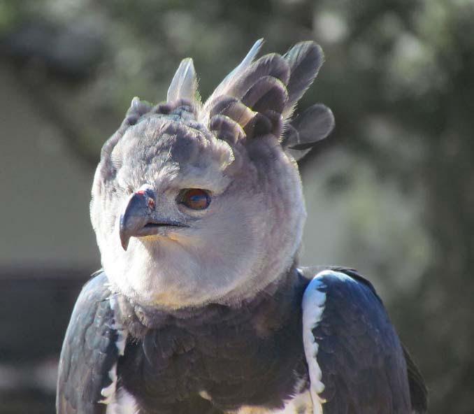 Ένα από τα μεγαλύτερα πτηνά στον κόσμο (4)