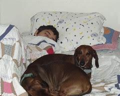Whose Bed by Teckelcar