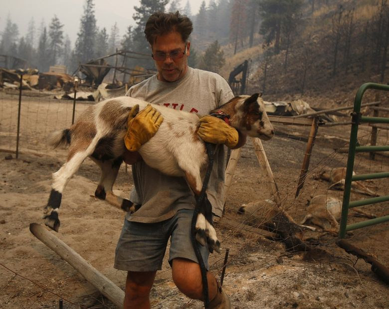 Todd Quinn carries a surviving goat Saturday after a wildfire swept through his ranch. (Sy Bean / The Seattle Times)