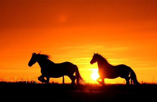 Sunset : horse Latitudes