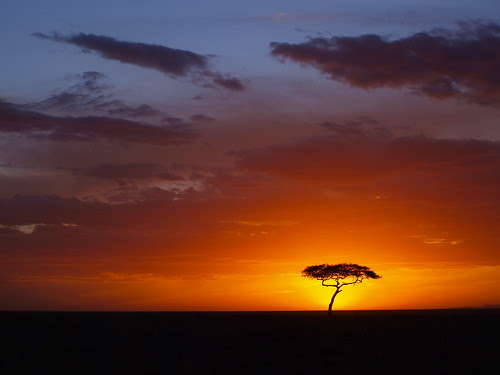 Sunset at Masai Mara por Ellen Therese Hoff