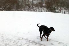 Lola_snow_122710