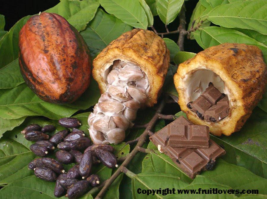 Chocolate, produzido a partir de sementes da árvore de cacau Theobroma cacao, é um dos sabores mais populares do mundo, com vendas em torno de 100 bilhões de dólares $ por ano. No entanto, enquanto a demanda em todo o mundo aumenta, há temores de que a indústria deixará de lidar com a crescente fome pública para o produto.