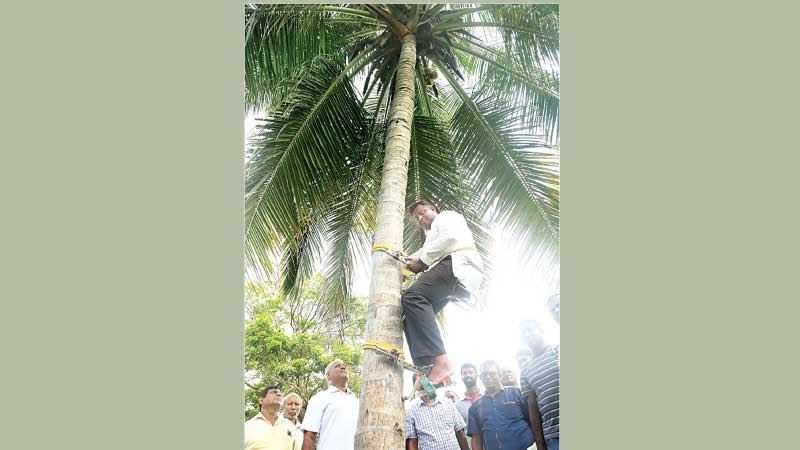 State Minister of Coconut, Fishtail Palm, Palmyra and Rubber product Promotion and Allied Industrial Production and Export Diversification Arundika Fernando is seen climbing a coconut tree in his home garden at Dankotuwa with the help of a coconut tree climbing machine.