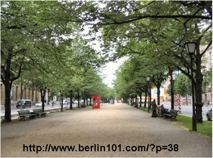 LindenTrees_Berlin