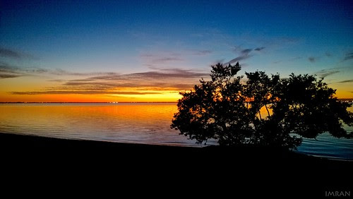 Sole Tree Silhouettes Tranquil Tampa Bay Dusk - IMRAN™ -- WindowsPhone Photo! by ImranAnwar