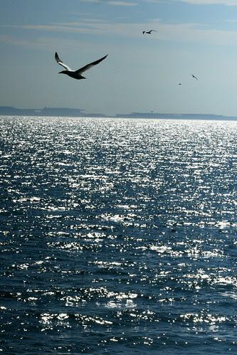 Birds over the ocean 2