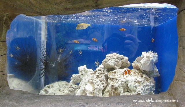 Denver Aquarium 8