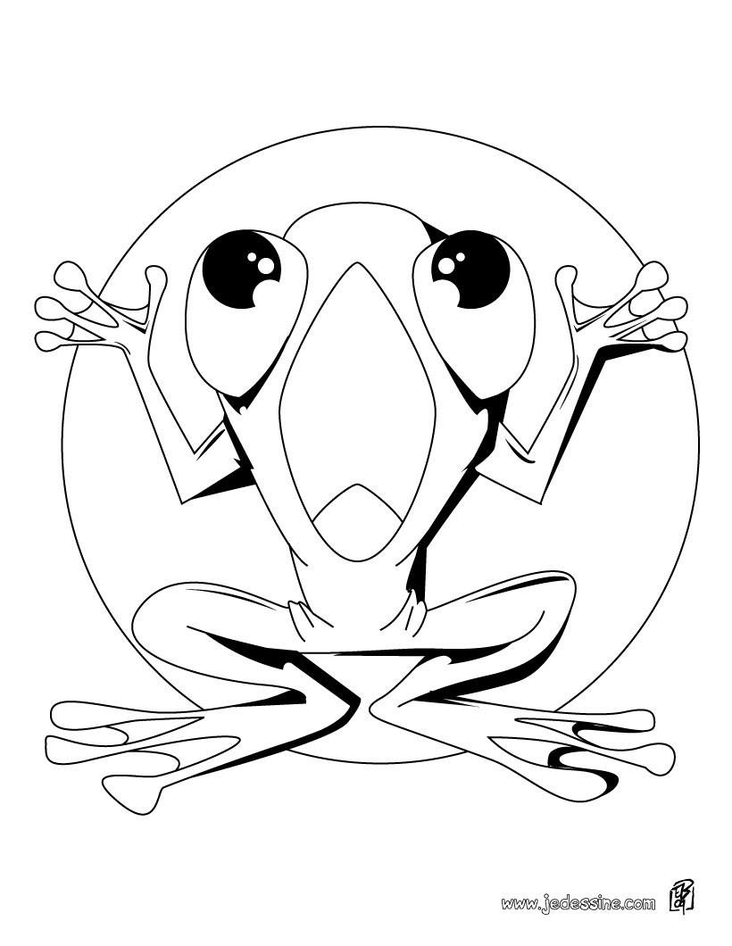 Coloriage d une grenouille étendue