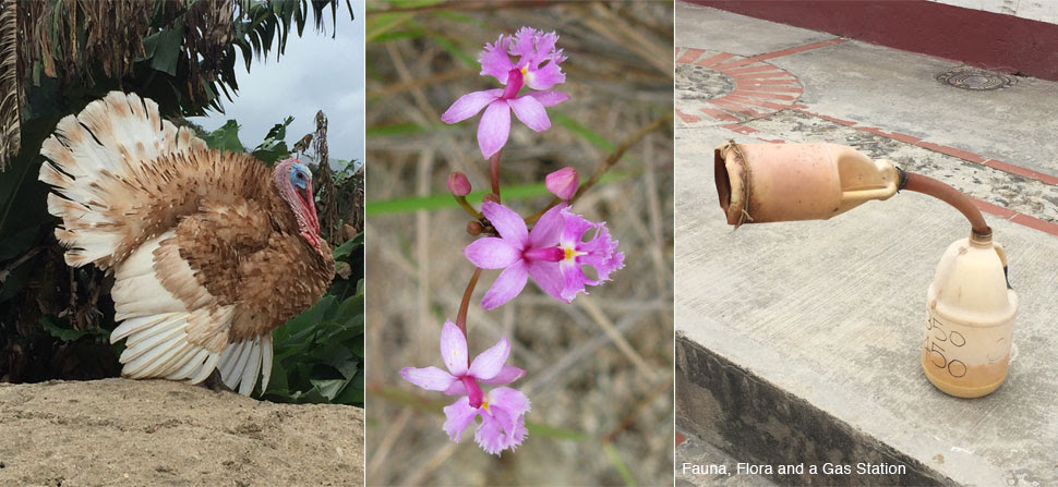 flora, fauna and gas station