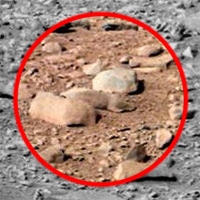 dnews-files-2013-06-mars-rat-abandon-130606-200