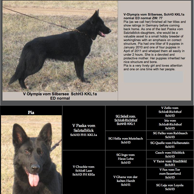 Find Black German Shepherd Puppies Breeders For Sale In Poland